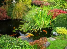 How to Create a Fish Pond in your Garden