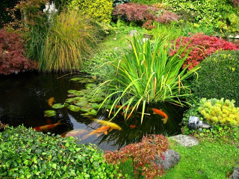 CT1 Premium Fish Pond Sealant - CT1