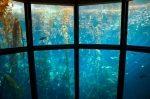 Sellante y adhesivo acuático multiusos